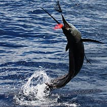 Costa Rica fishing is World Class