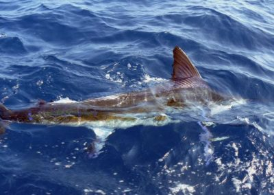 Capullo sportfishing fishing licenses